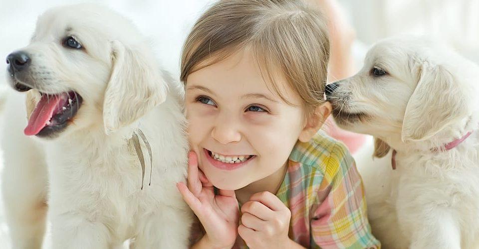 Dangers of Pet Urine in Your Carpet